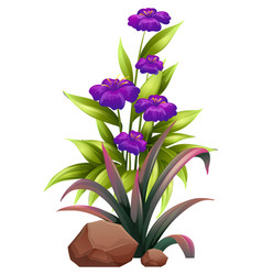Purple flowers with leaves on white background vector