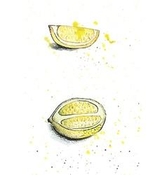watercolor lemons vector image