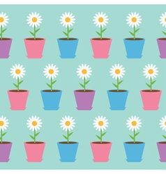 White daisy chamomile flower in pot Camomile vector image