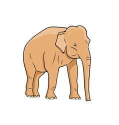 elephant isolated on the white vector image