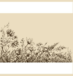 Field flowers border drawing vector