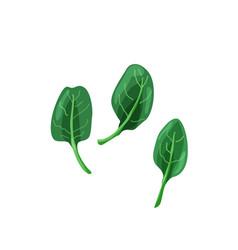 Green baspinach in bright color cartoon flat vector