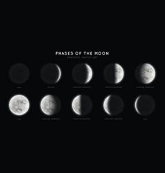 realistic phases moon vector image