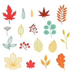Set various stylized autumn leaves and elements vector