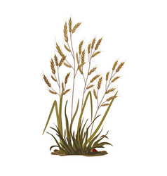 A bunch grass ears cereal vector
