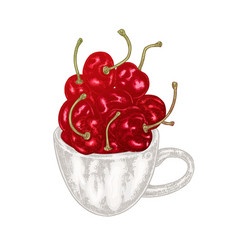 hand drawn cherry in mug fruit vector image