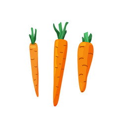 Three carrots with cut leaves in bright color vector
