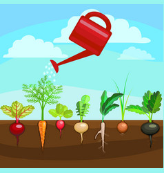 Cartoon colorful fresh organic food vegetable bed vector