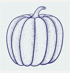 pumpkin doodle vector image