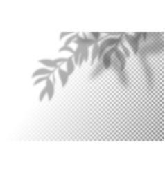 Realistic shadow overlay vector