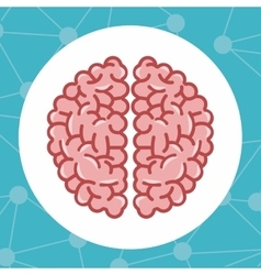 Colorful brain and science design vector