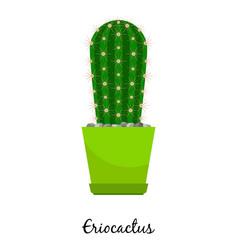 eriocactus cactus in pot vector image