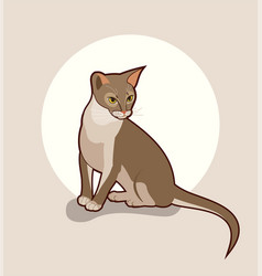 Abyssinian cat isolated close vector