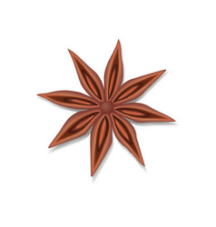 anise star seed isolated on white vector image