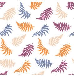 botanical of fern leaf vector image