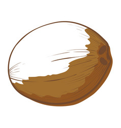 coconut large oval brown seed a tropical palm vector image