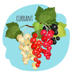 currant with green leaves white black and red vector image