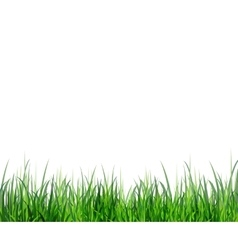 Grass green border vector image