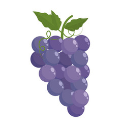 Isolated grapes fruit with leaves design vector