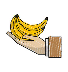 organic banana fruit in the hand icon vector image