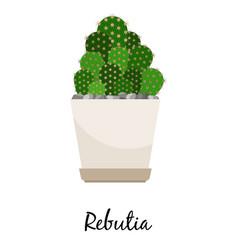 Rebutia cactus in pot vector