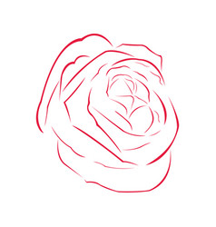 Rose outline image vector