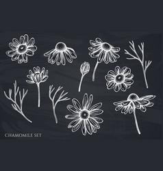 Set hand drawn chalk chamomile vector