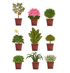 Set of pot deciduous flowering fruit plants with vector