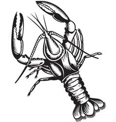 crayfish vector image