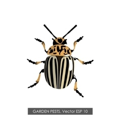 Detailed drawing of the Colorado potato beetle vector image vector image
