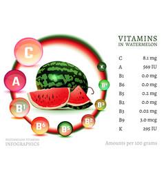 Watermelon vitamin infographic vector