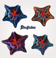 collection realistic starfishes for design vector image