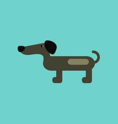 Flat icon on background pet dog dachshund vector