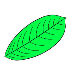 green leaf of plant from the contour black brush vector image