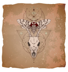 Roe deer skull and dead head moth vector
