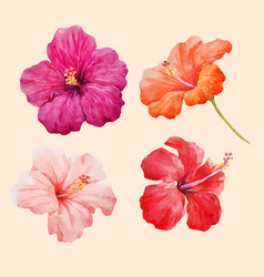 watercolor hibiscus set vector image