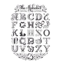 decorative alphabet typographic poster vector image