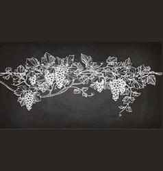 vine sketch on chalkboard vector image vector image