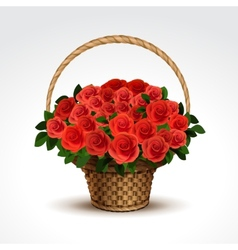 basket red roses isolated vector image