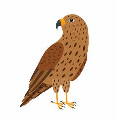 Falcon bird isolated on white vector