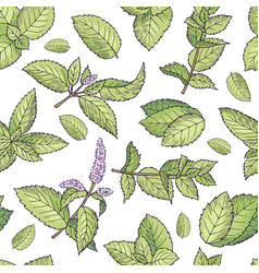 Green leafs of fresh mint seamless pattern vector