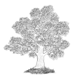 Oak tree and grass black contours vector image