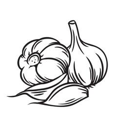 outline bunch garlic vector image