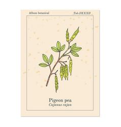 pigeon pea cajanus cajan medicinal plant vector image