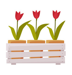 wooden crate with tulip flowers flat style vector image