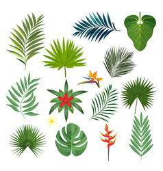 set of exotic tropical leaves isolated vector image vector image