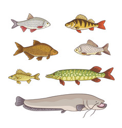 Freshwater fishes vector