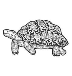Animal leopard tortoise sketch scratch board vector