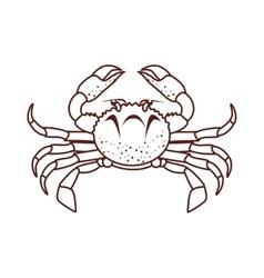 crab sea animal vector image