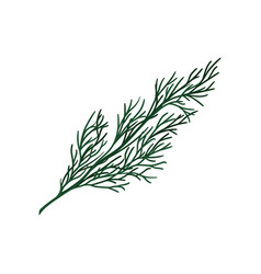 green twig of christmas tree small coniferous vector image